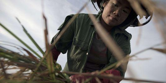 Guide des ONG locales en Birmanie