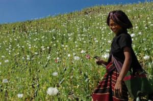 © Mongpawk Femme Lahu dans un champs d'opium - 2005