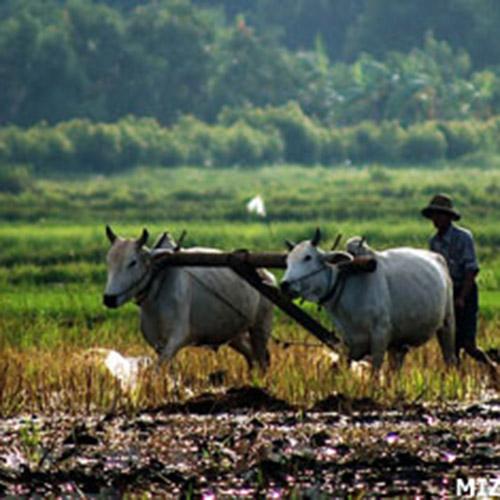 Terres confisquées sous la junte et sous le gouvernement de Thein Sein